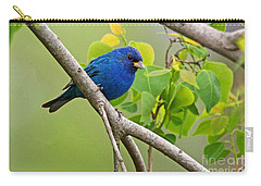 Blue Indigo Bunting Bird  Carry-all Pouch