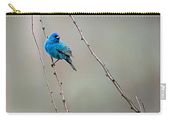 Indigo Bunting Square Carry-all Pouch by Bill Wakeley