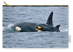 Carry-all Pouch featuring the photograph Killer Whale Mother And New Born Calf Orcas In Monterey Bay 2013 by California Views Mr Pat Hathaway Archives