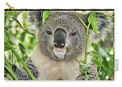 Koala Bear Carry-all Pouch