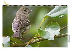 Lazuli Bunting Female 2 Carry-all Pouch by Sharon Talson