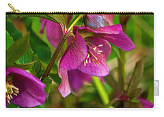 Carry-all Pouch featuring the photograph Lenten Rose by Jordan Blackstone