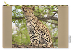Leopard Cub Gaze Carry-all Pouch