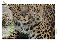 Leopard Lounging 1 Carry-all Pouch by Diane Alexander
