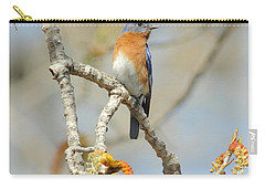 Male Bluebird In Budding Tree Carry-all Pouch