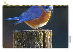 Male Bluebird Carry-all Pouch by Ronald Lutz