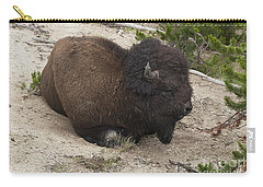 Carry-all Pouch featuring the photograph Male Buffalo At Hot Springs by Belinda Greb