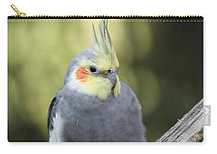 Carry-all Pouch featuring the photograph Male Cockatiel by Judy Whitton