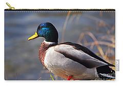 Male Mallard Duck Carry-all Pouch by Susan Wiedmann