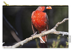 Male Northern Cardinal Carry-all Pouch by Gary Langley
