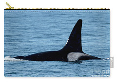 Carry-all Pouch featuring the photograph Male Orca Killer Whale In Monterey Bay 2013 by California Views Mr Pat Hathaway Archives