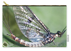 Mayfly Carry-all Pouch
