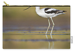 Carry-all Pouch featuring the photograph Morning Avocet by Bryan Keil