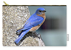 Carry-all Pouch featuring the photograph Mr Bluebird by Carol  Bradley