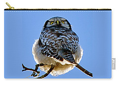 Northern Hawk Owl Looks Around Carry-all Pouch