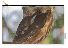 Northern Saw-whet Owl Carry-all Pouch