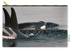 Carry-all Pouch featuring the photograph Orcas/killer Whales Off The San Juan Islands 1986 by California Views Mr Pat Hathaway Archives