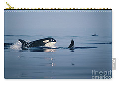 Carry-all Pouch featuring the photograph Orcas Off The San Juan Islands Washington  1986 by California Views Mr Pat Hathaway Archives