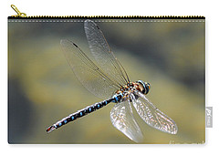 Carry-all Pouch featuring the photograph Paddletail Darner In Flight by Vivian Christopher