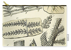 Paleozoic Flora, Calamites, Illustration Carry-all Pouch by British Library