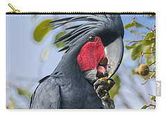 Palm Cockatoo Male Feeding On Nonda Carry-all Pouch