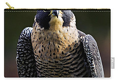 Peregrine Focus Carry-all Pouch by Mary Jo Allen