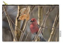Carry-all Pouch featuring the photograph Pine Grosbeak by David Porteus