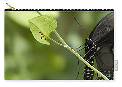 Carry-all Pouch featuring the photograph Pipevine Swallowtail Mother With Eggs by Meg Rousher