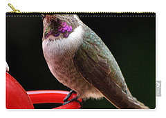 Carry-all Pouch featuring the photograph Pregnant Female Caliope With Purple Throat by Jay Milo