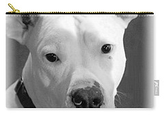 Carry-all Pouch featuring the photograph Prettyboy by Robert McCubbin