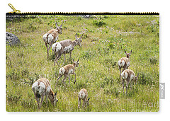 Carry-all Pouch featuring the photograph Pronghorn Antelope In Lamar Valley by Belinda Greb