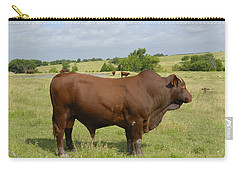 Red Angus Bull Carry-all Pouch by Charles Beeler