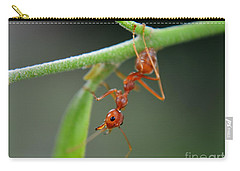 Red Ant Carry-all Pouch by Michelle Meenawong