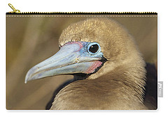 Red-footed Booby Incubating Eggs Carry-all Pouch by Tui De Roy