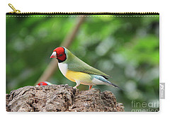 Red Headed Gouldian Finch Carry-all Pouch