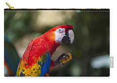Red Parrot  Carry-all Pouch by Garry Gay