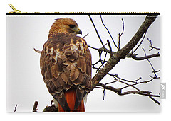 Red Tail Hawk In Winter Carry-all Pouch by Dianne Cowen