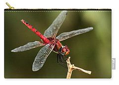 Red-veined Darter  - My Joystick Carry-all Pouch by Ramabhadran Thirupattur