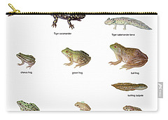 Relative Amphibian Sizes Carry-all Pouch by Carlyn Iverson
