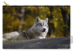 Carry-all Pouch featuring the photograph Resting Arctic Wolf On Rocks by Wolves Only