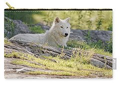 Carry-all Pouch featuring the photograph Resting Arctic Wolf by Wolves Only