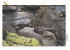 Carry-all Pouch featuring the photograph Resting Seal by Stuart Litoff