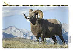 Rocky Mountain Big Horn Sheep Carry-all Pouch by Bob Christopher