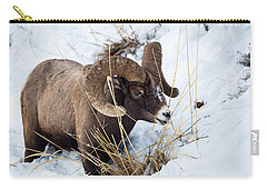 Carry-all Pouch featuring the photograph Rocky Mountain Bighorn Sheep by Michael Chatt