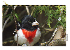 Rose Breasted Grosbeak Perched Carry-all Pouch