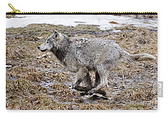 Carry-all Pouch featuring the photograph Running Timber Wolf by Wolves Only