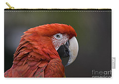 Scarlet Macaw Carry-all Pouch by David Millenheft