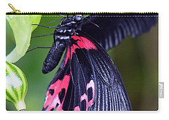 Scarlet Mormon Carry-all Pouch