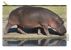 Side Profile Of A Hippopotamus Walking Carry-all Pouch by Panoramic Images