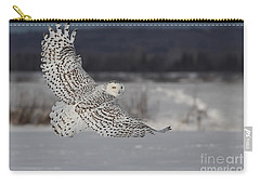 Snowy Owl In Flight Carry-all Pouch by Mircea Costina Photography